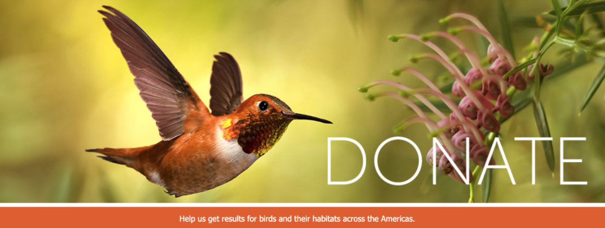 20201229 - BLOG - Nonprofit Fundraising Call to Action - American Bird 2