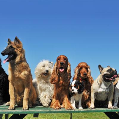Host an animal de-stress day as your next advocacy fundraising idea.