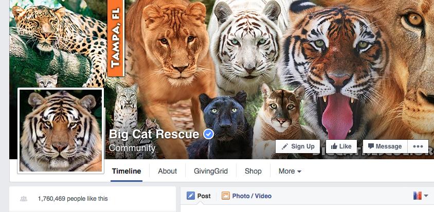 big-cat-rescue-fb