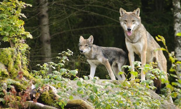 endangered-species-coalition