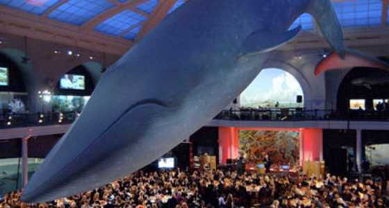 Host a gala to raise money for your nonprofit organization.