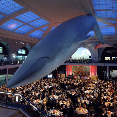 Host a gala at your museum to raise money.