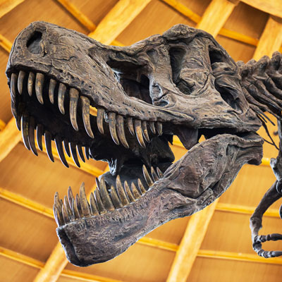 Hold a night at the museum to raise money for your museum.