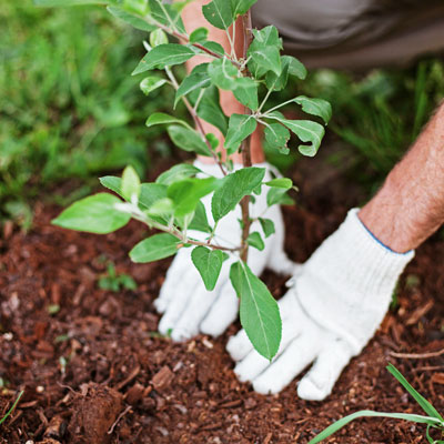 Tree planting events are powerful fundraising events that are sure to rake in donations.